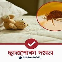 Bed Bug - 3 BED